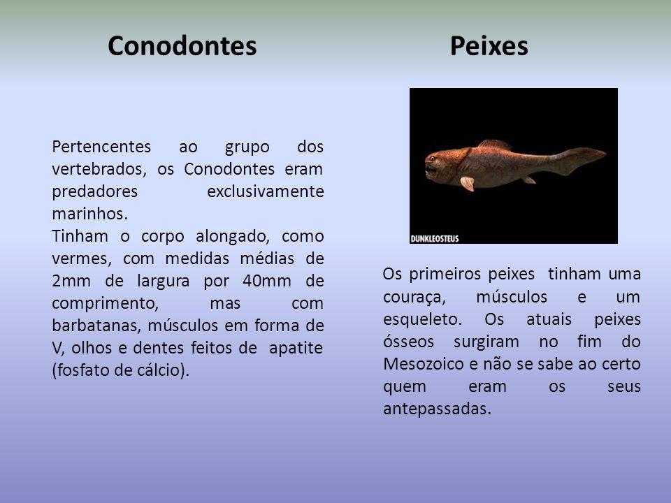 ProcariontesInvertebrados Existiram há cerca de 540 milhões de anos e viviam principalmente nos oceanos. Destacam-se os protozoários, as águas-vivas,