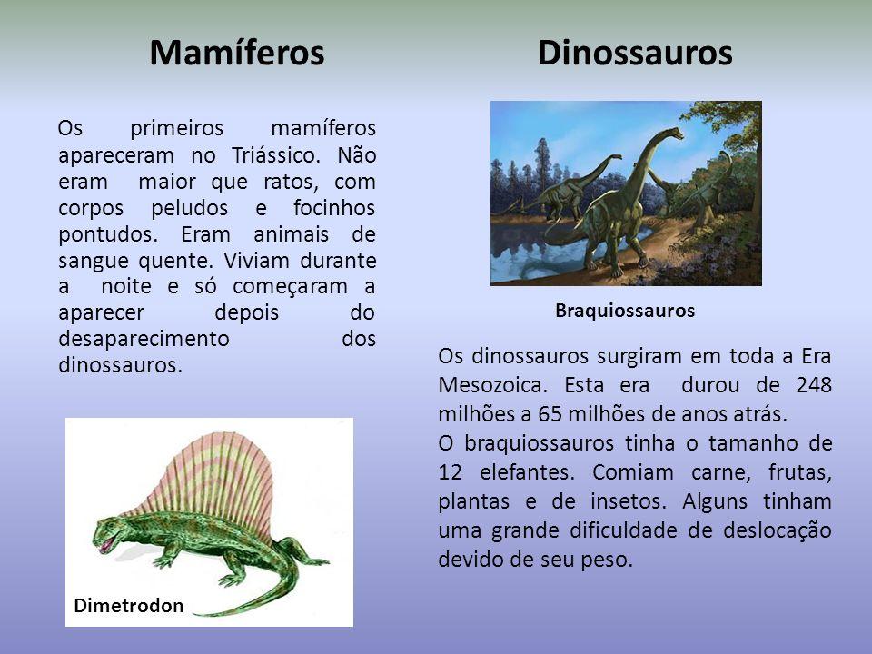 Aves e insetos Meganeura monyi era uma espécie de inseto pré-histórico que viveu há cerca de 300 milhões de anos atrás e era parecido com as atuais li