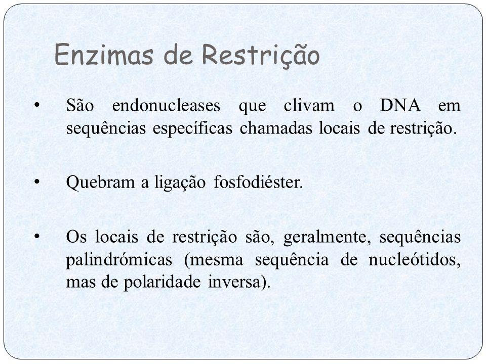 Enzimas de Restrição São endonucleases que clivam o DNA em sequências específicas chamadas locais de restrição. Quebram a ligação fosfodiéster. Os loc