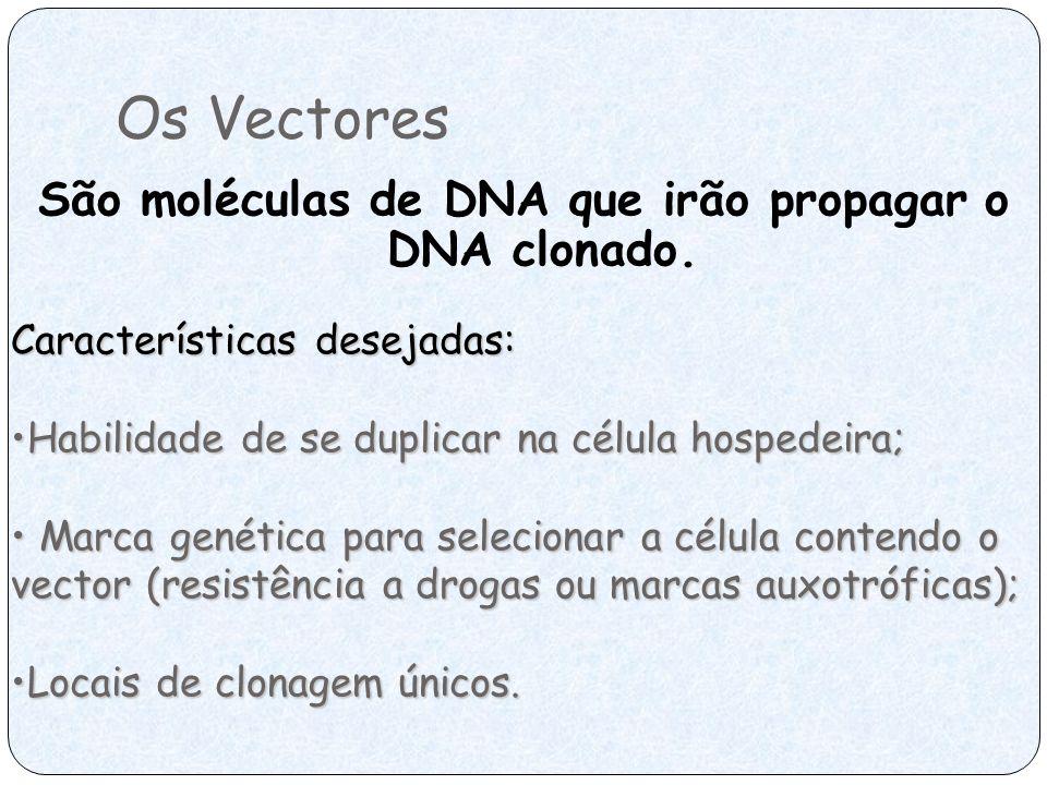 Os Vectores São moléculas de DNA que irão propagar o DNA clonado. Características desejadas: Habilidade de se duplicar na célula hospedeira;Habilidade