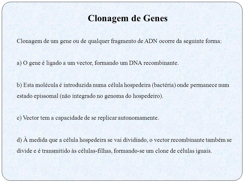 Clonagem de Genes Clonagem de um gene ou de qualquer fragmento de ADN ocorre da seguinte forma: a) O gene é ligado a um vector, formando um DNA recomb