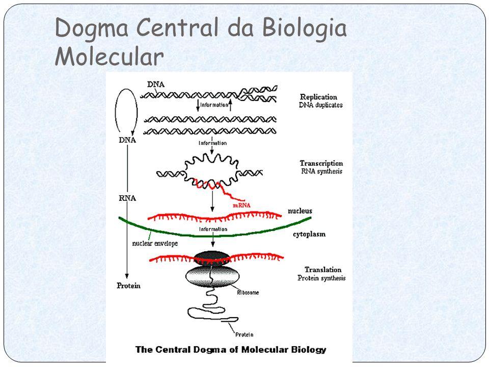 Enzimas de Restrição Endonucleases específicas isoladas de procariontes.