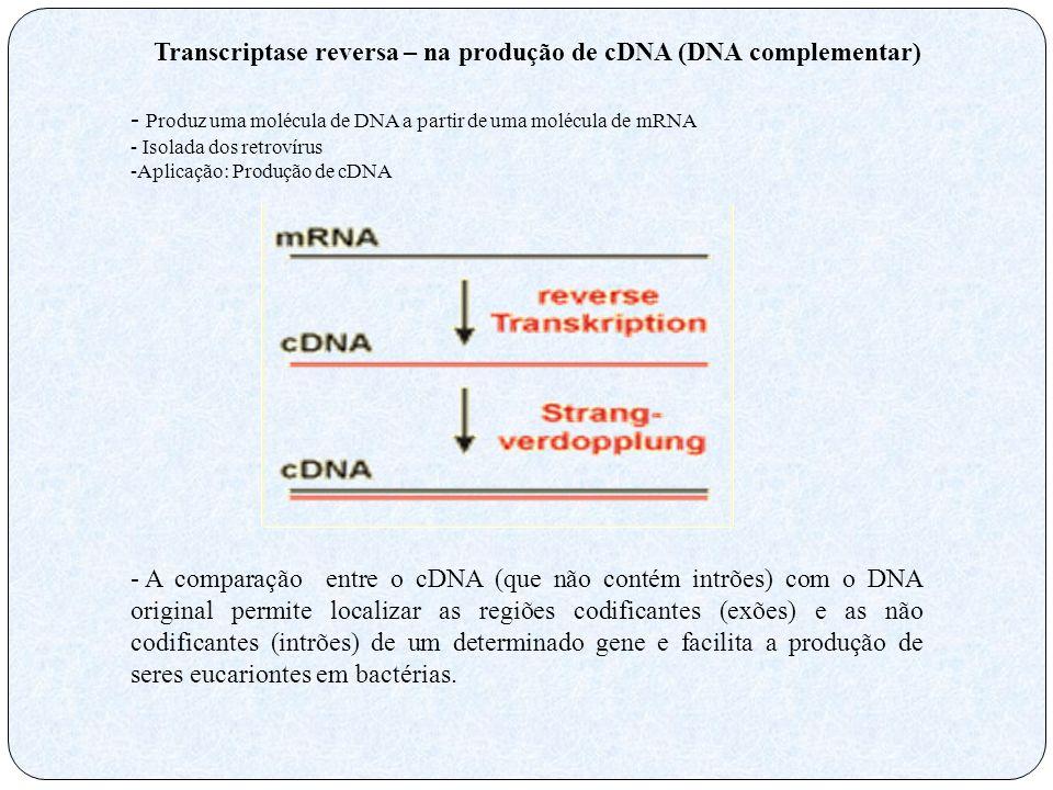 Transcriptase reversa – na produção de cDNA (DNA complementar) - Produz uma molécula de DNA a partir de uma molécula de mRNA - Isolada dos retrovírus