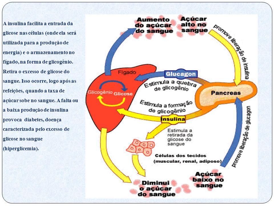 A insulina facilita a entrada da glicose nas células (onde ela será utilizada para a produção de energia) e o armazenamento no fígado, na forma de gli
