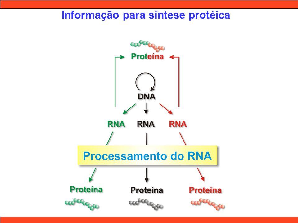 Informação para síntese protéica