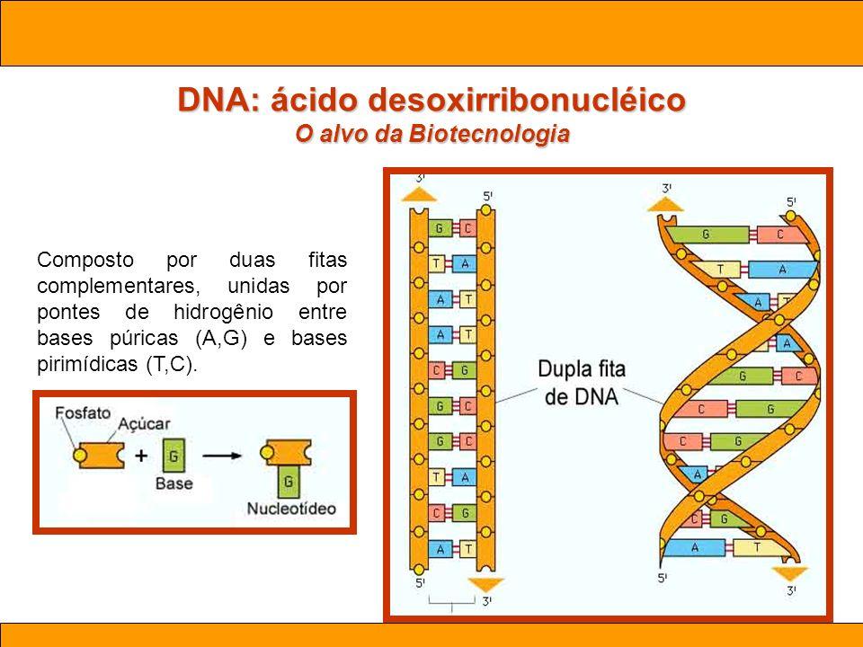Ciências. Aula 03 Biotecnologia Composto por duas fitas complementares, unidas por pontes de hidrogênio entre bases púricas (A,G) e bases pirimídicas