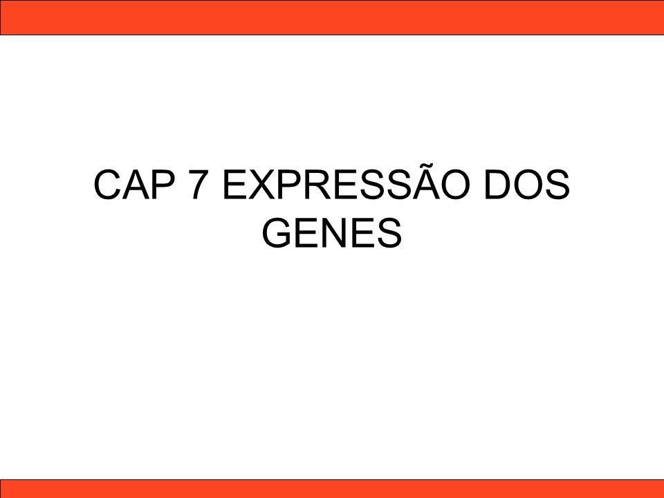 Nucleotídeo – unidade básica do DNA Nucleotídeo : pentose (desoxirribose) + base nitrogenada + fosfato Purinas Pirimidinas