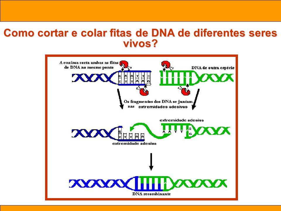 Ciências. Aula 03 Biotecnologia Como cortar e colar fitas de DNA de diferentes seres vivos?