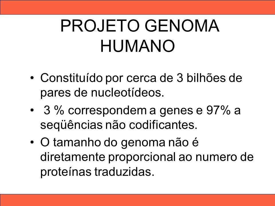 PROJETO GENOMA HUMANO Constituído por cerca de 3 bilhões de pares de nucleotídeos. 3 % correspondem a genes e 97% a seqüências não codificantes. O tam