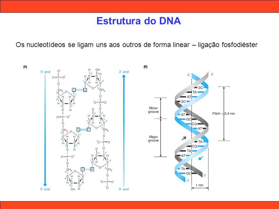Estrutura do DNA Os nucleotídeos se ligam uns aos outros de forma linear – ligação fosfodiéster