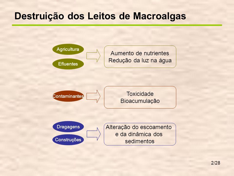 13/28 Como o leito de macroalgas está no fundo, recebe sempre menos radiação que o fitoplâncton...