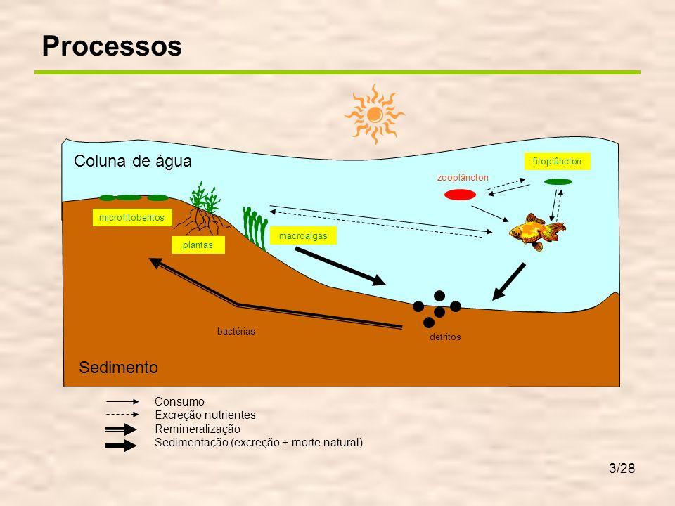 14/28 Os leitos de macroalgas aumentam os gradientes diários de oxigénio Se se aumentar a extinção de luz na água, podem-se gerar situações anóxicas Oxigénio