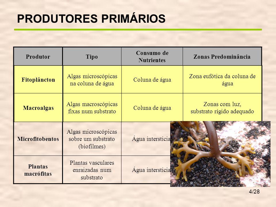 4/28 ProdutorTipo Consumo de Nutrientes Zonas Predominância Fitoplâncton Algas microscópicas na coluna de água Coluna de água Zona eufótica da coluna