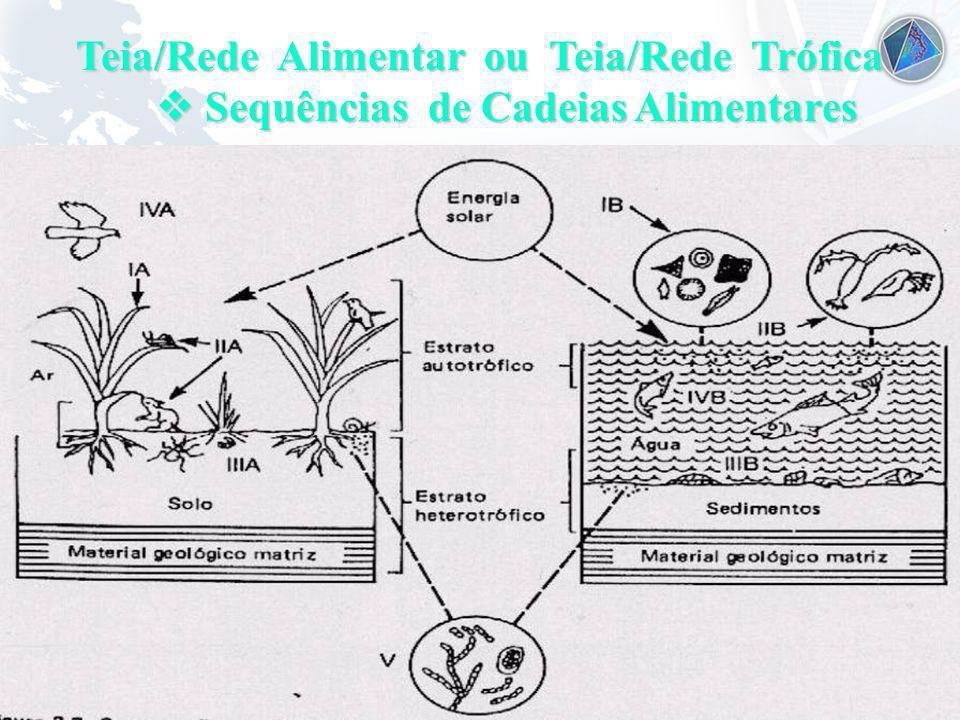Universidade Federal do Esp Santo - UFES Teia/Rede Alimentar ou Teia/Rede Trófica Sequências de Cadeias Alimentares Sequências de Cadeias Alimentares
