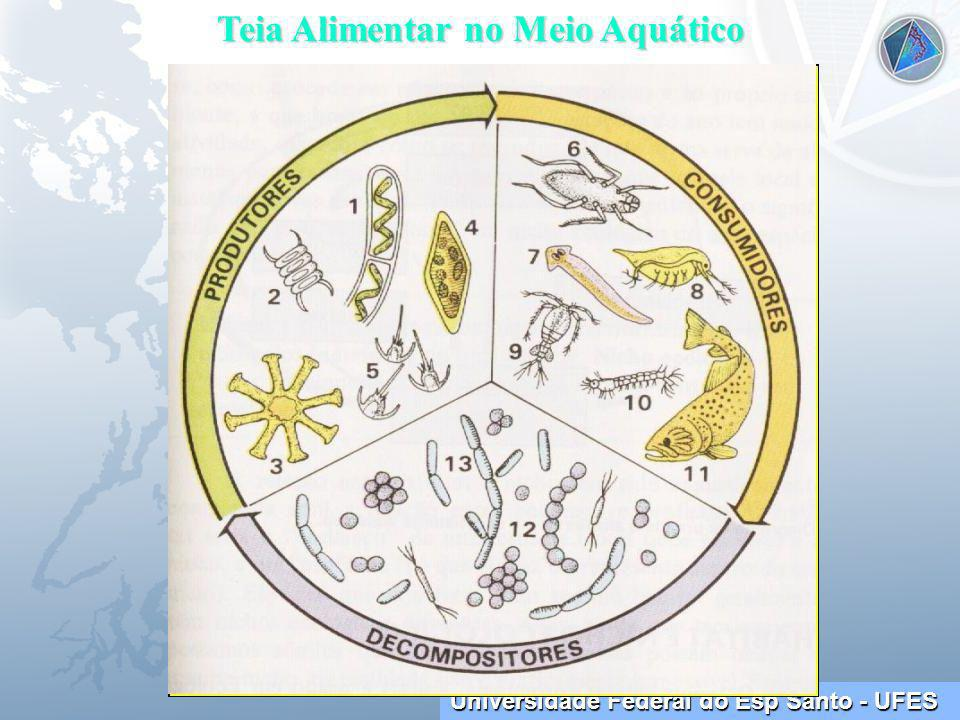 Universidade Federal do Esp Santo - UFES Teia Alimentar no Meio Aquático