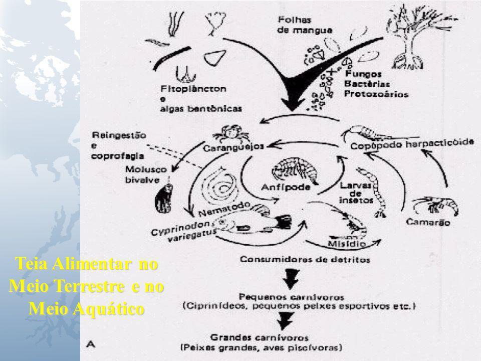 Universidade Federal do Esp Santo - UFES Mangue Teia Alimentar no Meio Terrestre e no Meio Aquático