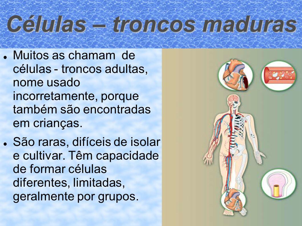 Células – troncos maduras Muitos as chamam de células - troncos adultas, nome usado incorretamente, porque também são encontradas em crianças. São rar