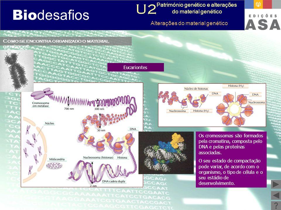 Biodesafios 12 Como se encontra organizado o material genético? Eucariontes Os cromossomas são formados pela cromatina, composta pelo DNA e pelas prot