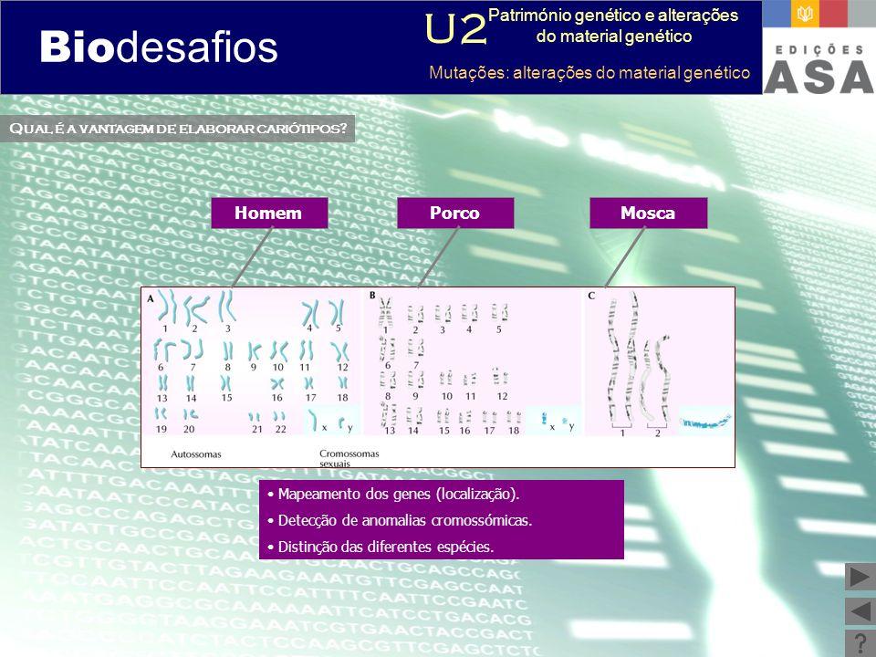 Biodesafios 12 Qual é a vantagem de elaborar cariótipos? Mapeamento dos genes (localização). Detecção de anomalias cromossómicas. Distinção das difere