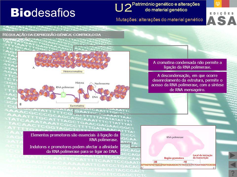 Biodesafios 12 Regulação da expressão génica: controlo da transcrição Elementos promotores são essenciais à ligação da RNA polimerase. Indutores e pro