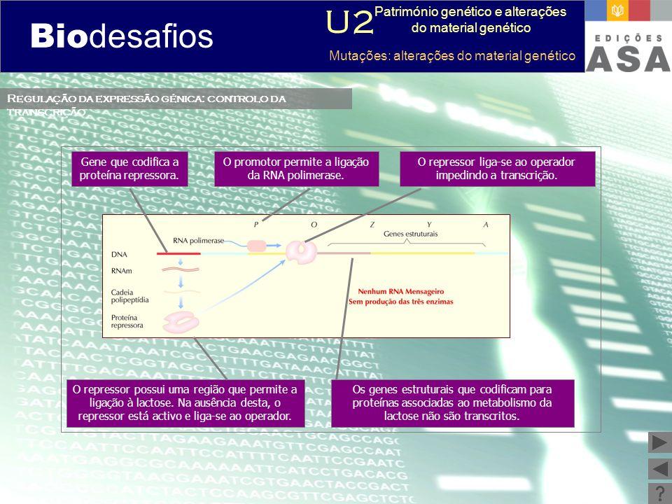 Biodesafios 12 O repressor possui uma região que permite a ligação à lactose. Na ausência desta, o repressor está activo e liga-se ao operador. Gene q