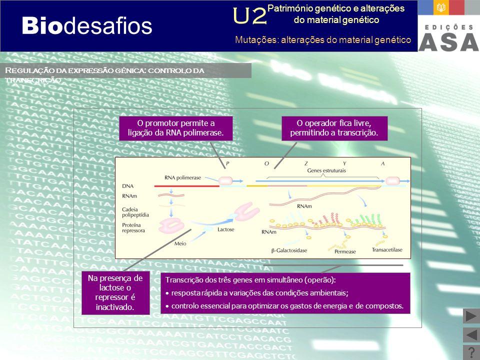 Biodesafios 12 Transcrição dos três genes em simultâneo (operão): resposta rápida a variações das condições ambientais; controlo essencial para optimi