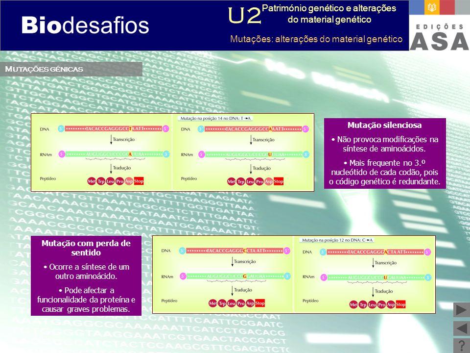Biodesafios 12 Mutações génicas Mutação com perda de sentido Ocorre a síntese de um outro aminoácido. Pode afectar a funcionalidade da proteína e caus