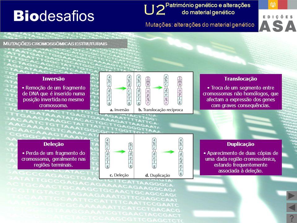 Biodesafios 12 Mutações cromossómicas estruturais Inversão Remoção de um fragmento de DNA que é inserido numa posição invertida no mesmo cromossoma. T