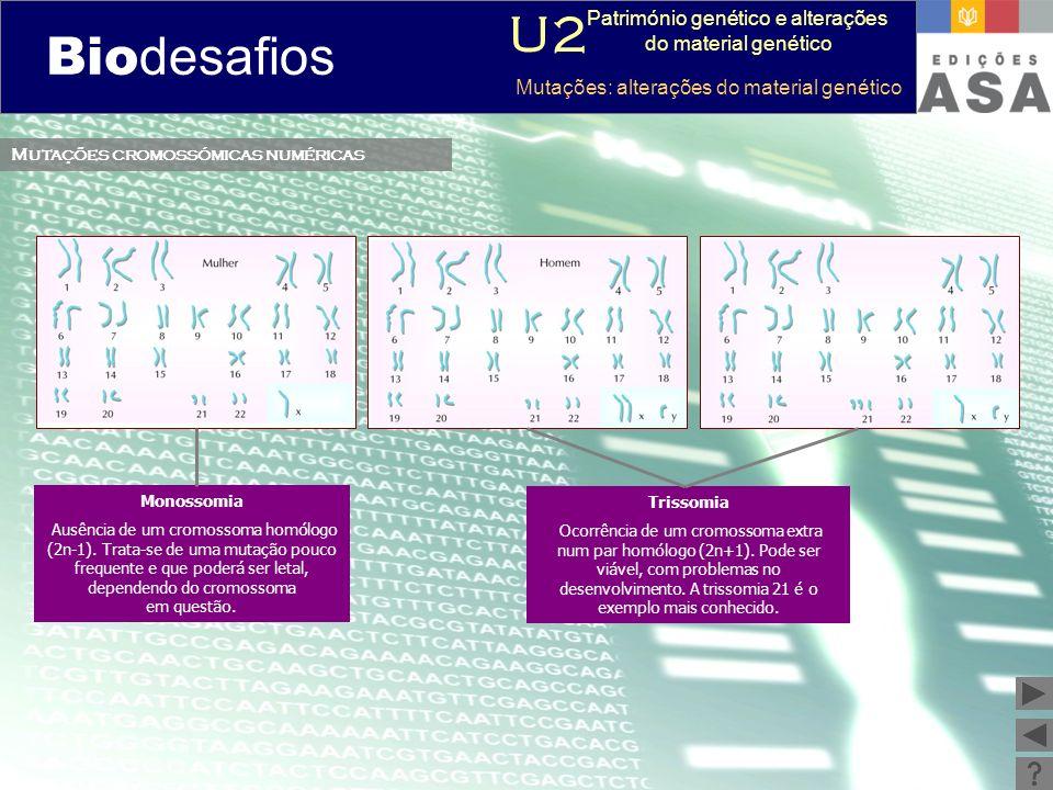 Biodesafios 12 Mutações cromossómicas numéricas Monossomia Ausência de um cromossoma homólogo (2n-1). Trata-se de uma mutação pouco frequente e que po
