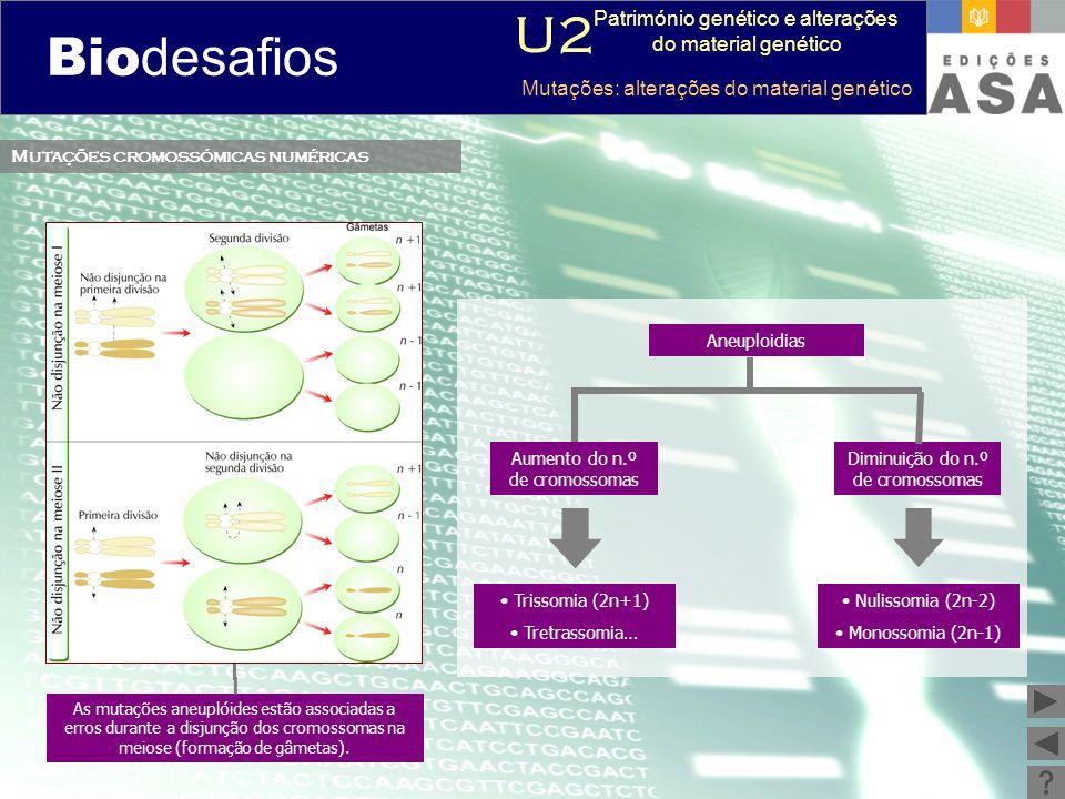 Biodesafios 12 Mutações cromossómicas numéricas Aneuploidias Trissomia (2n+1) Tretrassomia… Diminuição do n.º de cromossomas Aumento do n.º de cromoss