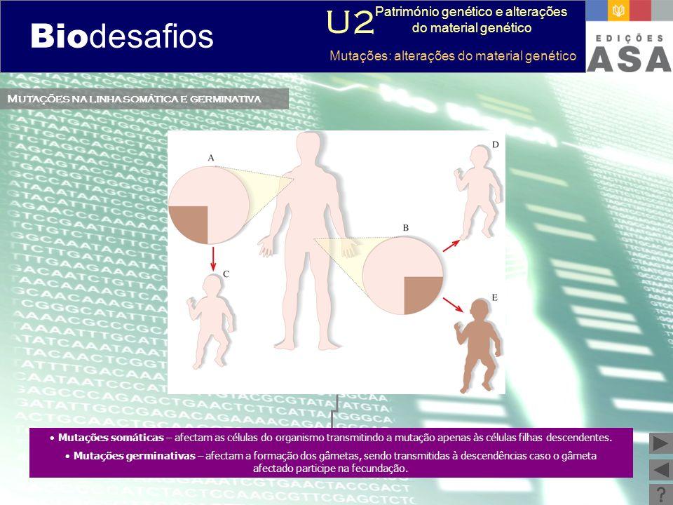Biodesafios 12 Mutações na linha somática e germinativa Mutações somáticas – afectam as células do organismo transmitindo a mutação apenas às células