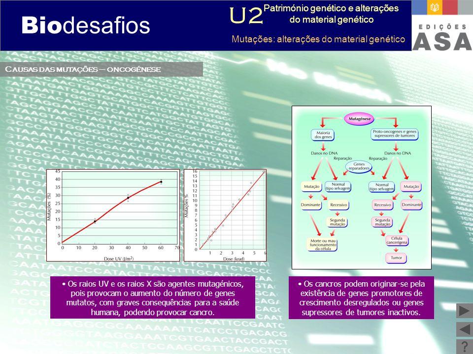 Biodesafios 12 Causas das mutações – oncogénese Os raios UV e os raios X são agentes mutagénicos, pois provocam o aumento do número de genes mutatos,