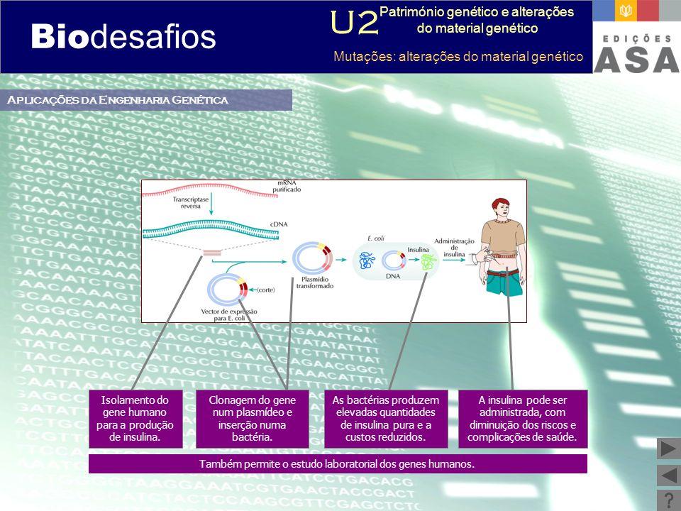 Biodesafios 12 Aplicações da Engenharia Genética Também permite o estudo laboratorial dos genes humanos. Isolamento do gene humano para a produção de