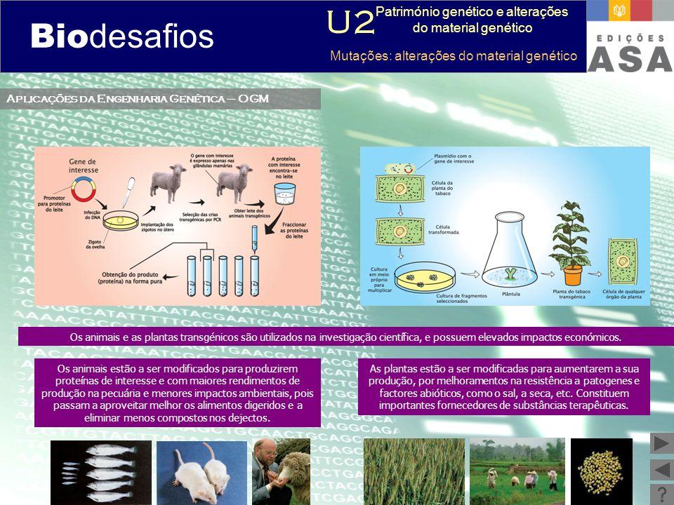 Biodesafios 12 Aplicações da Engenharia Genética – OGM Os animais e as plantas transgénicos são utilizados na investigação científica, e possuem eleva