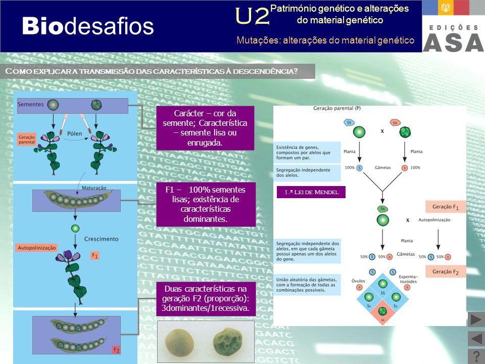 Biodesafios 12 Como explicar a transmissão das características à descendência? Duas características na geração F2 (proporção): 3dominantes/1recessiva.