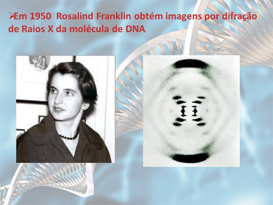 Em 1950 Rosalind Franklin obtém imagens por difração de Raios X da molécula de DNA.