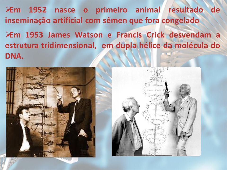 Em 1952 nasce o primeiro animal resultado de inseminação artificial com sêmen que fora congelado. Em 1953 James Watson e Francis Crick desvendam a est