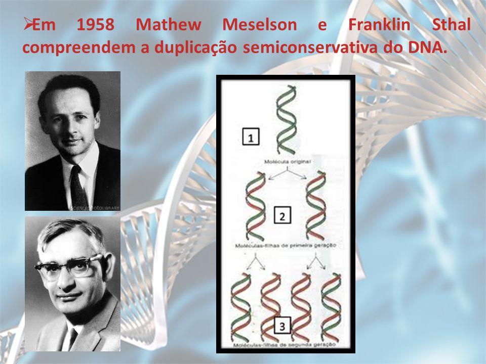 Em 1958 Mathew Meselson e Franklin Sthal compreendem a duplicação semiconservativa do DNA.
