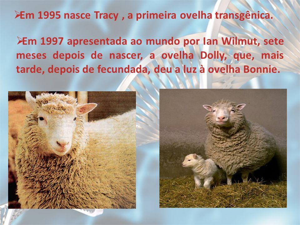 Em 1995 nasce Tracy, a primeira ovelha transgênica. Em 1997 apresentada ao mundo por Ian Wilmut, sete meses depois de nascer, a ovelha Dolly, que, mai
