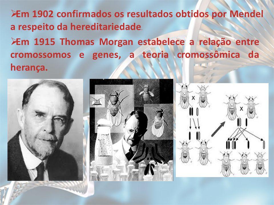 Em 1902 confirmados os resultados obtidos por Mendel a respeito da hereditariedade. Em 1915 Thomas Morgan estabelece a relação entre cromossomos e gen
