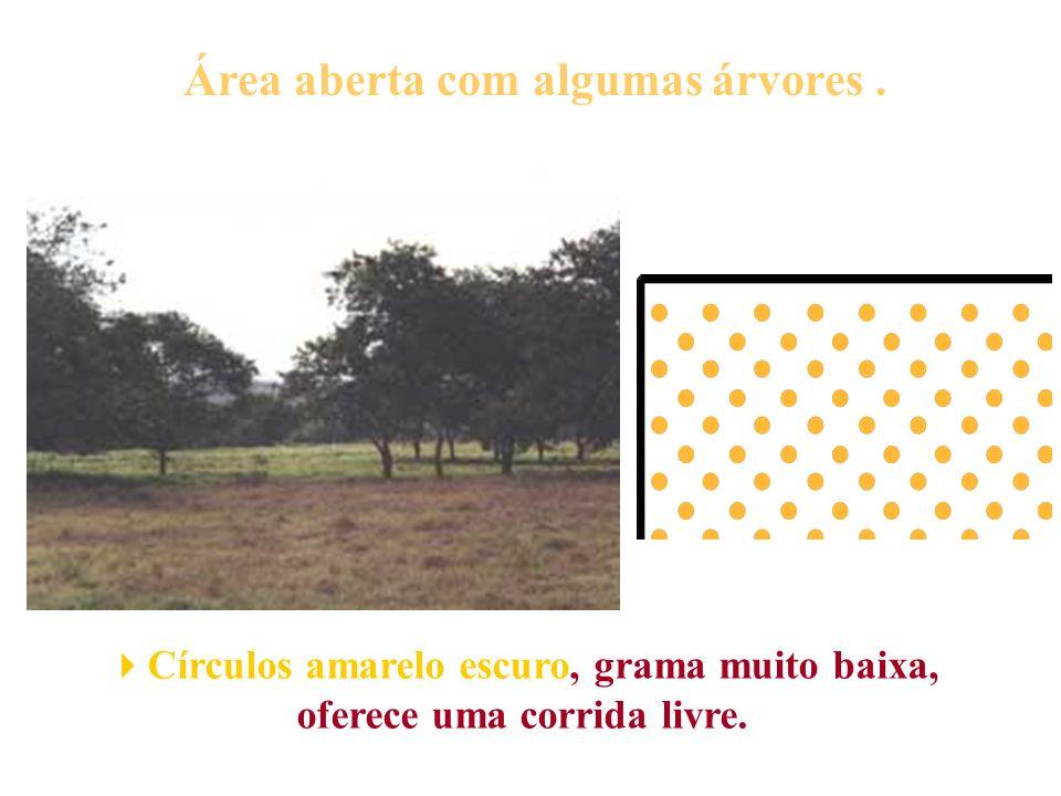 Área aberta com algumas árvores. Círculos amarelo escuro, grama muito baixa, oferece uma corrida livre.