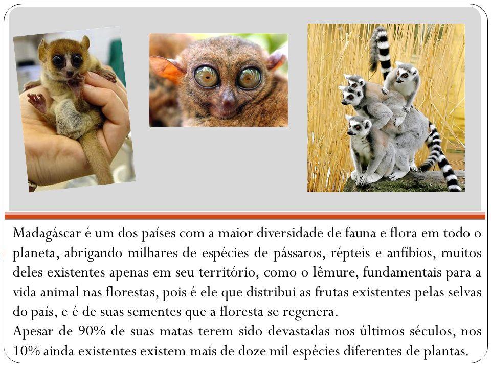 Madagáscar é um dos países com a maior diversidade de fauna e flora em todo o planeta, abrigando milhares de espécies de pássaros, répteis e anfíbios,