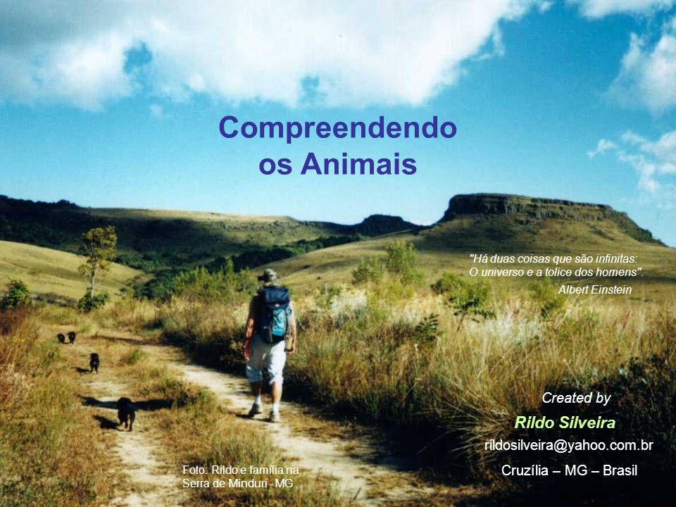 Compreendendo os Animais Rildo Silveira Created by rildosilveira@yahoo.com.br Cruzília – MG – Brasil Há duas coisas que são infinitas: O universo e a tolice dos homens .