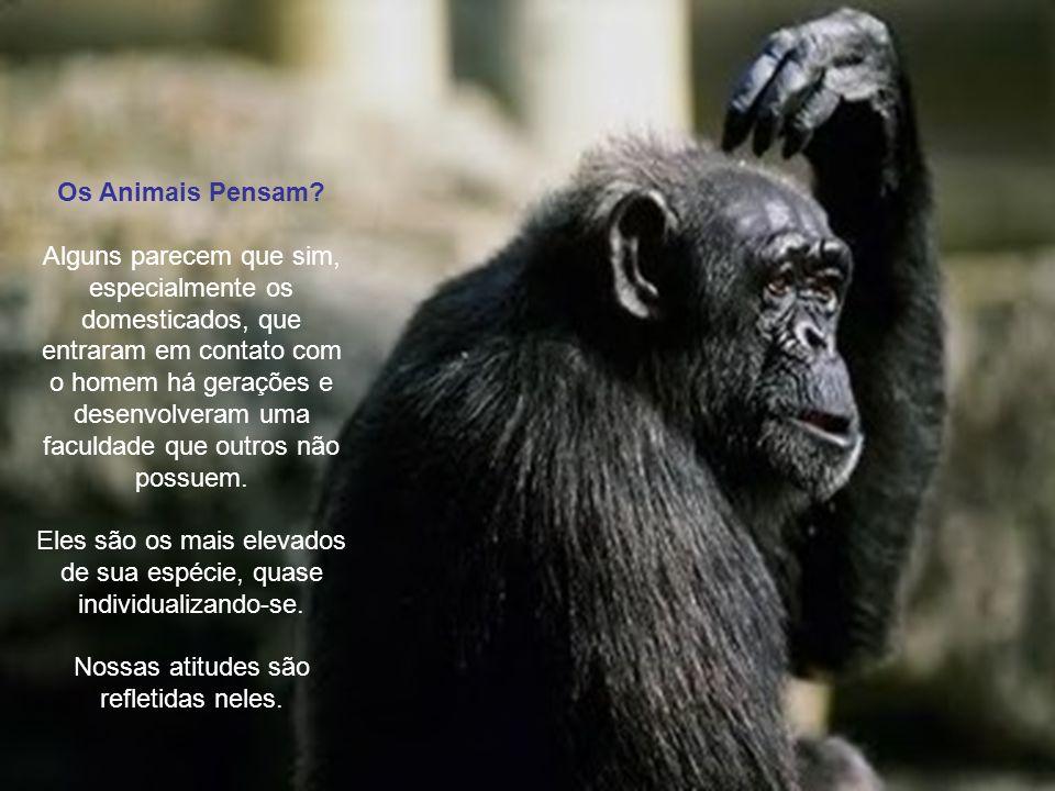 Compreendendo os Animais Rildo Silveira Created by rildosilveira@yahoo.com.br Cruzília – MG – Brasil