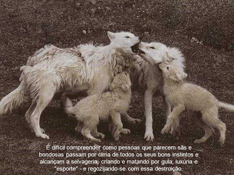 O homem amará e protegerá os animais em todos os casos, onde sua ganância e seus interesses egoístas não o ceguem em relação aos direitos deles. Nosso