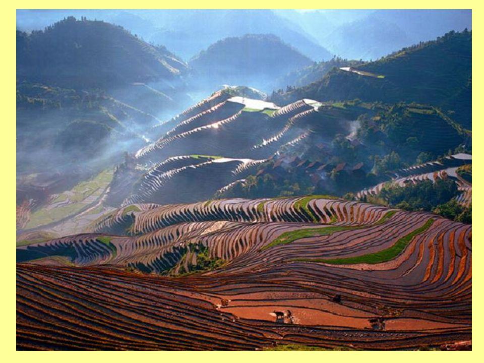 Trabalho humano Terraços para cultivo de arroz na China