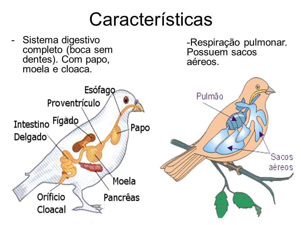 Características -Sistema digestivo completo (boca sem dentes). Com papo, moela e cloaca. -Respiração pulmonar. Possuem sacos aéreos.