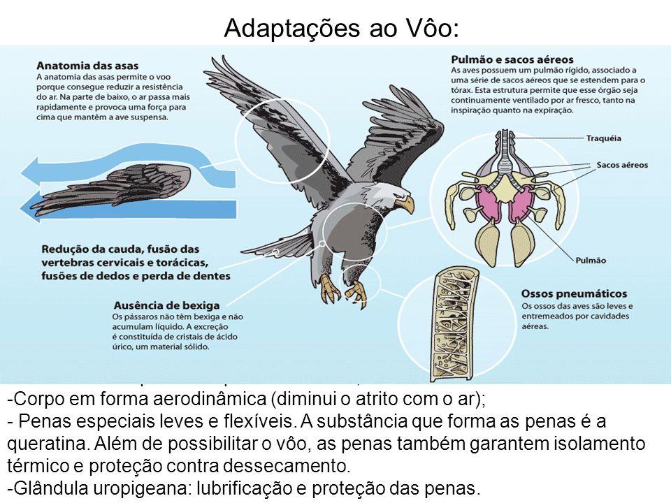 Adaptações ao Vôo: -Osso esterno apresenta quilha ou carena; -Corpo em forma aerodinâmica (diminui o atrito com o ar); - Penas especiais leves e flexí