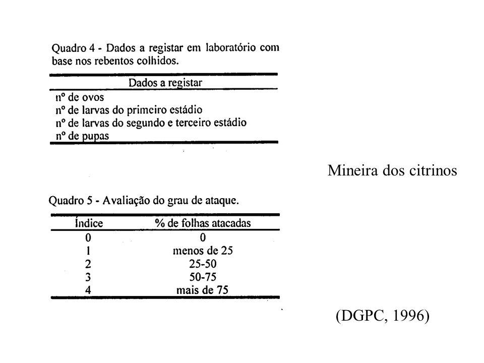 CITRINOS - ESTIMATIVA DO RISCO - Mineira dos citrinos (Phyllocnistis citrella Staiton) Evolução das populações- placas cromotrópicas / curva de voo un