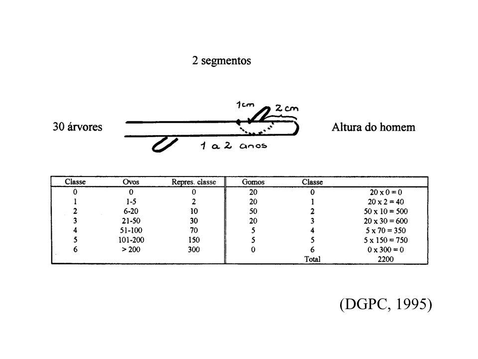 MOSCA BRANCA DOS CITRINOS (Aleurotrixus floccosus) Factores decisivos na abundância da mosca-branca-dos-citrinos: –hospedeiro –temperatura –humidade relativa –vento –chuva –organismos diversos (auxiliares) Tem numerosas gerações anuais e elevado potencial biológico A sua caracterização morfológica permite entender: - relação funcional das ligações entre os diferentes estádios da praga - repercussões da sua acção na fisiologia das plantas - interpretação das respectivas susceptibilidades perante condicionalismos agro-ecológicos - compreender a ineficácia dos tratamentos vulgarmente utilizados na luta contra este organismo e outras pragas dos citrinos